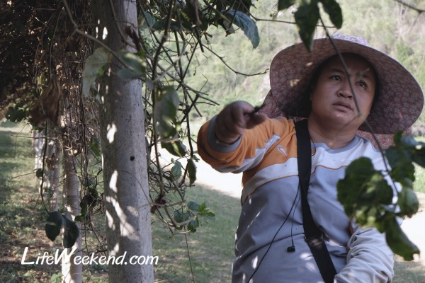 singha_park_09